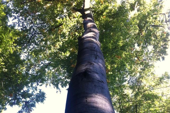 Bäume spenden Schatten und Atmosphäre