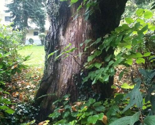 Bäume haben Geschichte und bringen Atmosphäre in Garten und Vorgarten.